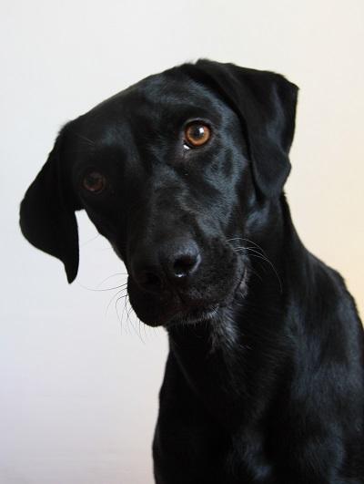 Kala-adoption-chien-SPA la kitsch lorraine